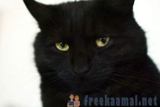 crna pička maca jako lijep veliki penis
